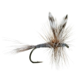 Adams Best Fly for Trout