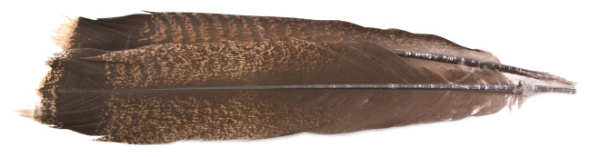 Turkey Feathers Cinnamon Tip