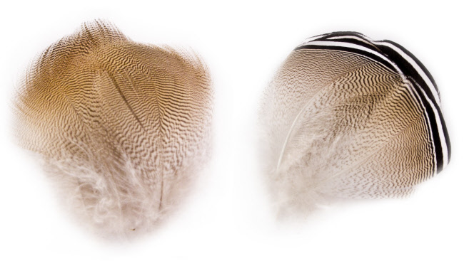 Woodduck Feathers Natures Spirit