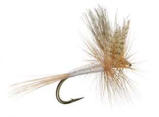 Light Cahill Dry Fly Trout