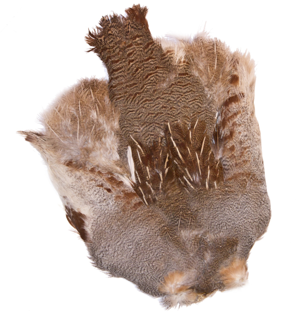 Hungarian Partridge Skin